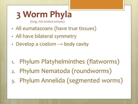 3 Worm Phyla (long, thin bodied animals) All eumatazoans (have true tissues) All have bilateral symmetry Develop a coelom → body cavity 1. Phylum Platyhelminthes.