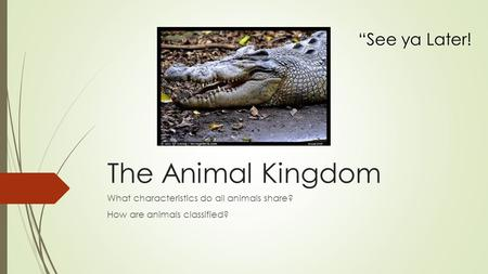 "The Animal Kingdom What characteristics do all animals share? How are animals classified? ""See ya Later!"