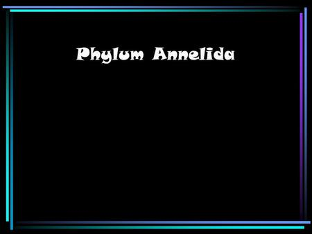Phylum Annelida. Body plan Annelids are coelomate animals (meaning they have true coelom. Even if this reduced secondarily.) They normally have long thin.