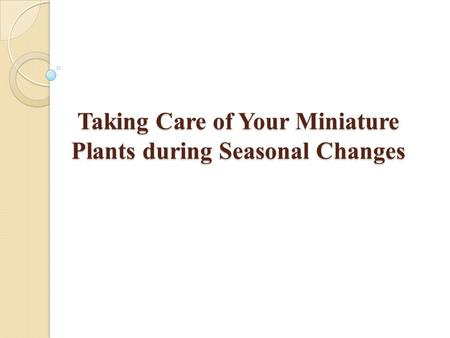 Taking Care of Your Miniature Plants during Seasonal Changes.