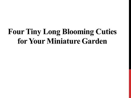 Four Tiny Long Blooming Cuties for Your Miniature Garden.