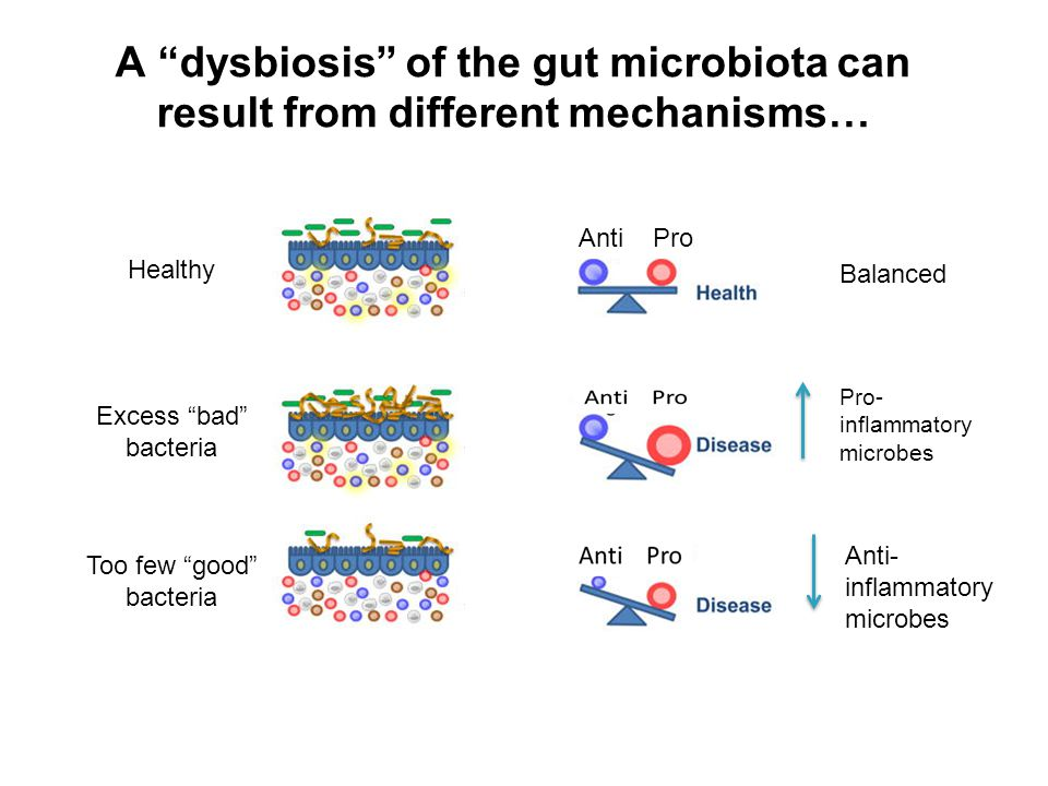 GUT BARRIER FUNCTION AND MICROBIOTA