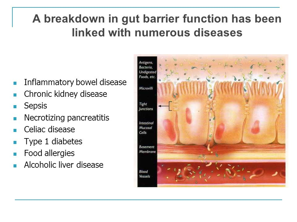 WHAT IS THE ROLE OF THE MICROBIOTA AND GUT PERMEABILITY IN KIDNEY DISEASE?