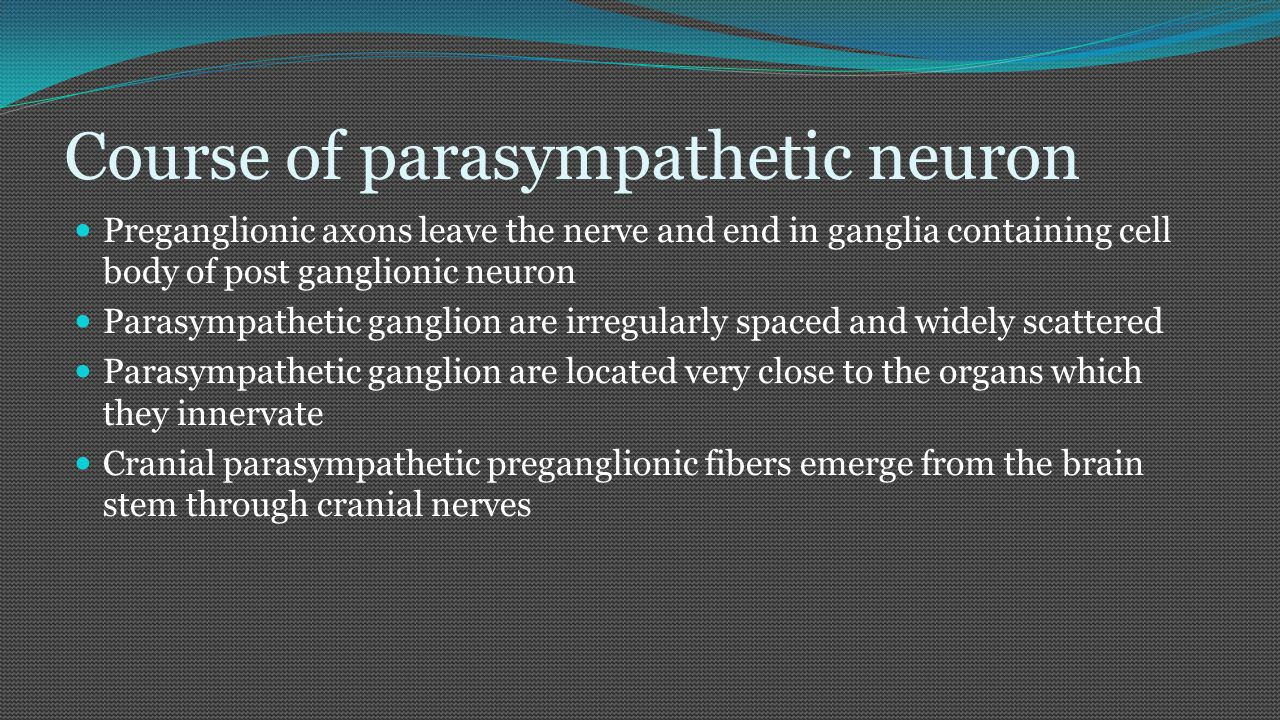 Course of parasympathetic neuron Preganglionic fiber emerge through oculomotor, facial, glossopharyngeal, and vagus nerves Preganglionic fibers from III, VII, and IX CN end by synapsing with post ganglionic neurons in four large parasympathetic ganglia The pre ganglionic fibers of the vagus nerve go beyond the head region to synapse with post ganglionic cell bodies in ganglia adjacent or in the walls of viscera (heart, lungs, stomach and intestine)