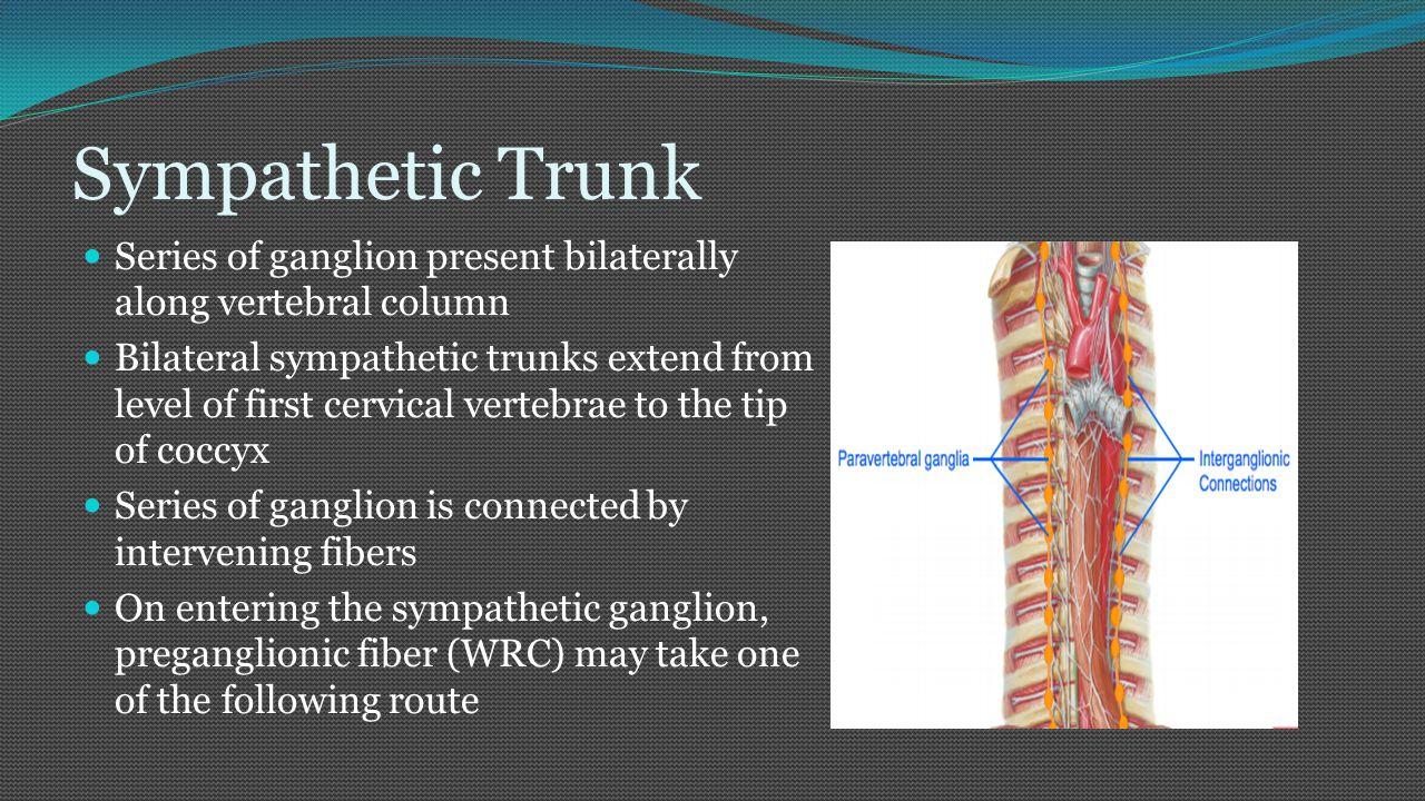 Course of preganglionic fiber 1.