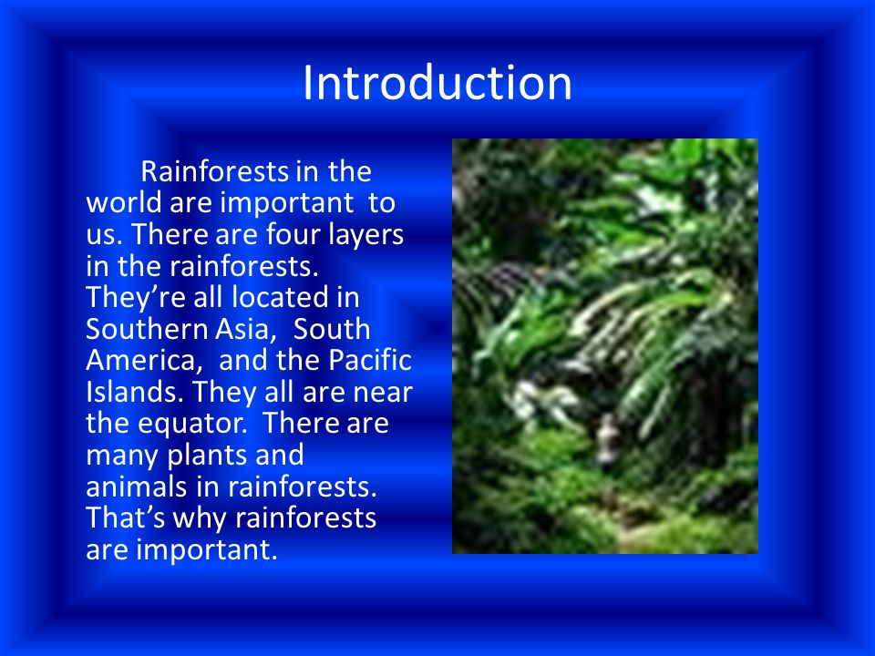 Forest Floor and Understory The forest floor and the understory are the two lowest layers.
