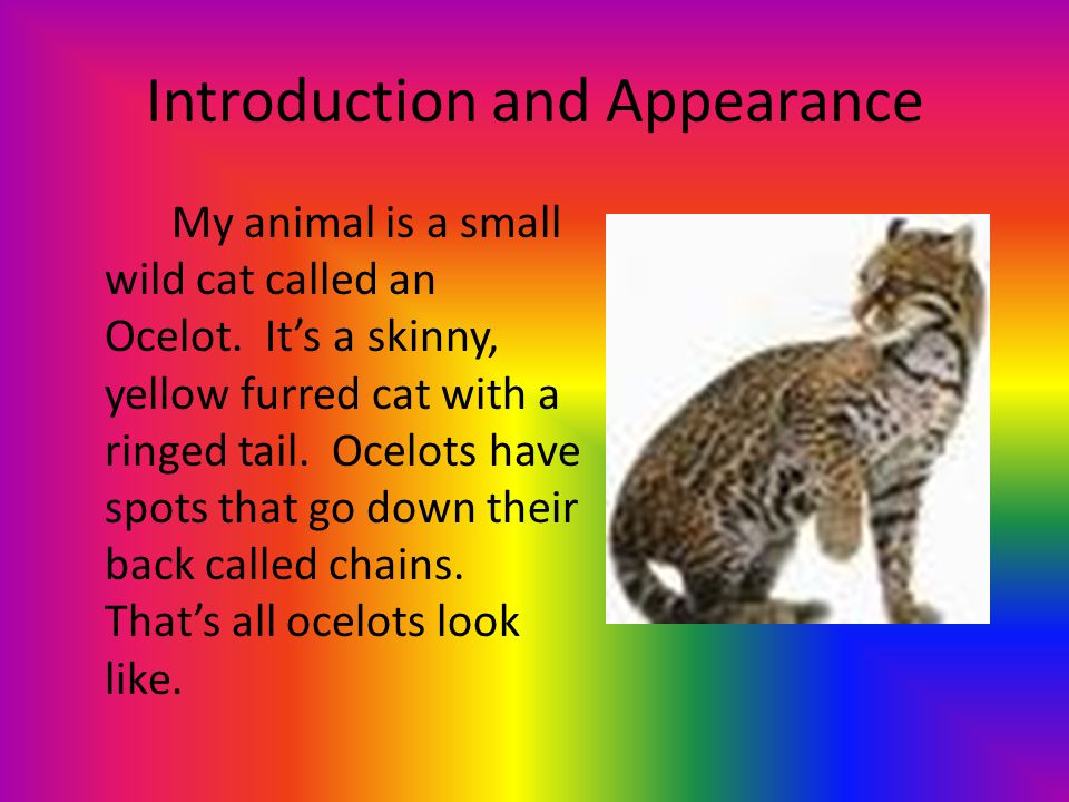 Habitat Many ocelots live where plants grow.They live in South America and Central America.