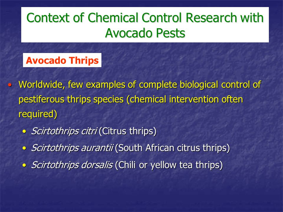 Considerable research has focused on control using augmentative releases of various predaceous mite speciesConsiderable research has focused on control using augmentative releases of various predaceous mite species Released mites do not appear to persist from year to yearReleased mites do not appear to persist from year to year Generally, cost of effective annual augmentative releases is considered prohibitiveGenerally, cost of effective annual augmentative releases is considered prohibitive Avocado Persea Mite