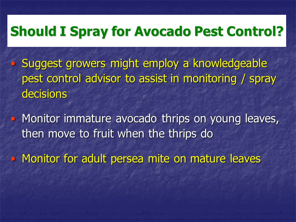 Good treatment decisions are tricky - several factors are involved:Good treatment decisions are tricky - several factors are involved: Tree size and health (vigor), grove topographyTree size and health (vigor), grove topography Timing (leaf flushes), weatherTiming (leaf flushes), weather Natural enemy levelsNatural enemy levels Grower tolerance for fruit scarring (short-term economics versus natural enemy and thrips susceptibility maintenance)Grower tolerance for fruit scarring (short-term economics versus natural enemy and thrips susceptibility maintenance) Leaf drop tolerance for persea mite feeding (increases when > 7.5-10 % of the leaf surface is damaged)Leaf drop tolerance for persea mite feeding (increases when > 7.5-10 % of the leaf surface is damaged) Spray equipment availabilitySpray equipment availability Many groves do not require an avocado thrips or persea mite treatment in a particular yearMany groves do not require an avocado thrips or persea mite treatment in a particular year