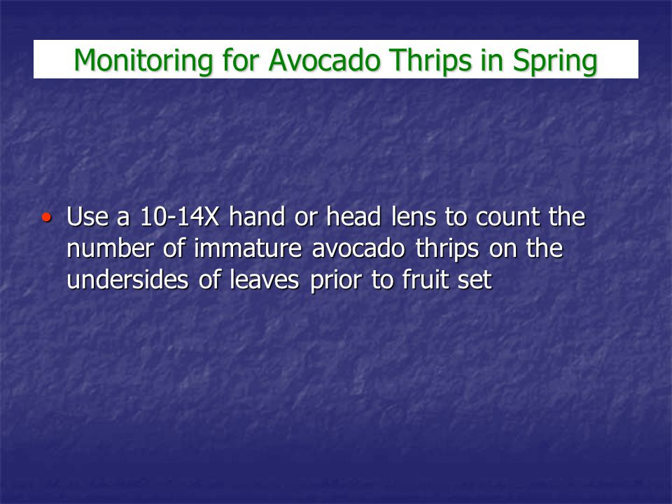 Study by Phillips and Faber on Hass avocados in Ventura Co.Study by Phillips and Faber on Hass avocados in Ventura Co.