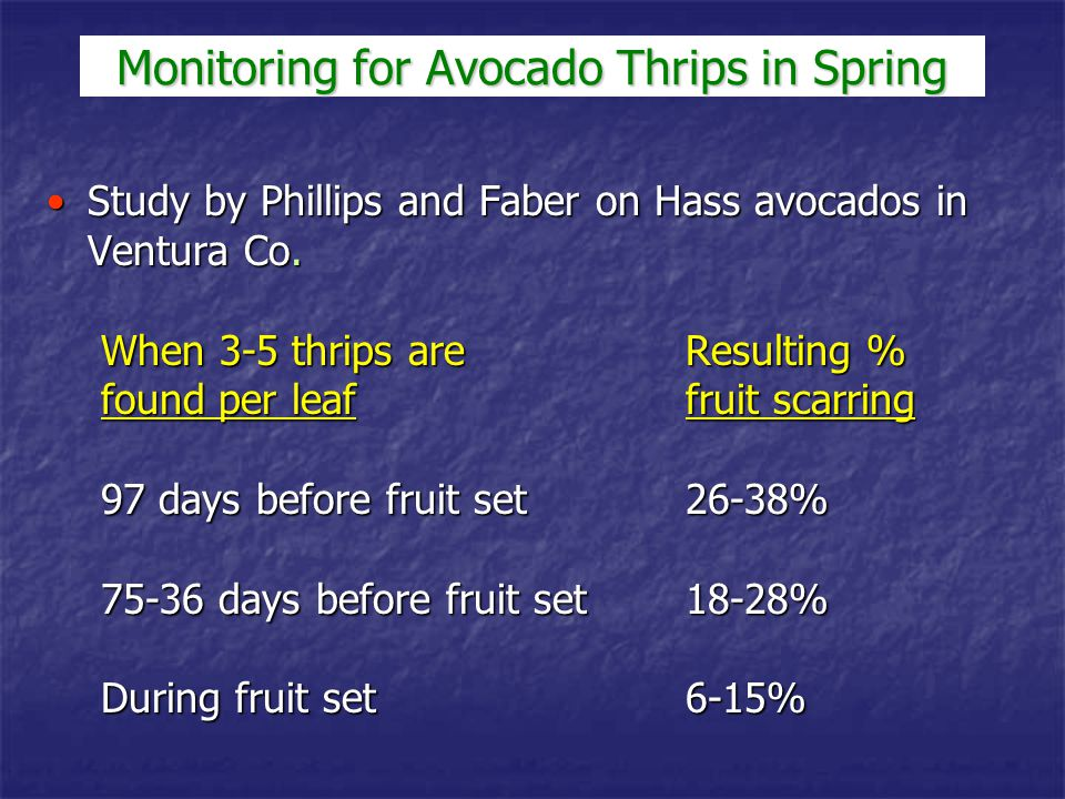Avocado thrips do best under moderately cool temperatures (68-76 °F)Avocado thrips do best under moderately cool temperatures (68-76 °F) Under hot conditions (> 90 °F), populations crashUnder hot conditions (> 90 °F), populations crash Smaller fruit are more susceptible to damage by avocado thripsSmaller fruit are more susceptible to damage by avocado thrips As fruit become larger (1.5 inches or more in diameter) - large numbers of thrips are needed to cause significant levels of fruit scarringAs fruit become larger (1.5 inches or more in diameter) - large numbers of thrips are needed to cause significant levels of fruit scarring Monitoring for Avocado Thrips in Spring