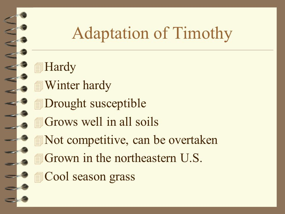 Adaptation of Timothy  Hardy  Winter hardy  Drought susceptible  Grows well in all soils  Not competitive, can be overtaken  Grown in the northeastern U.S.