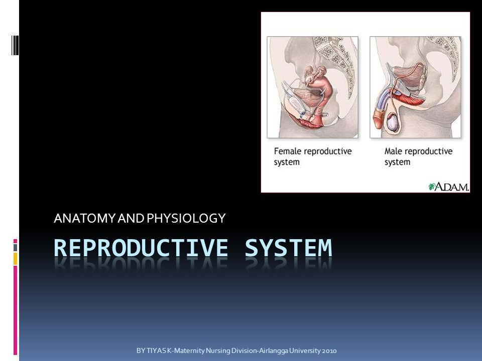 Female Reproductive System  Organ  Region  Function Anatomy and physiology of female reproductive system