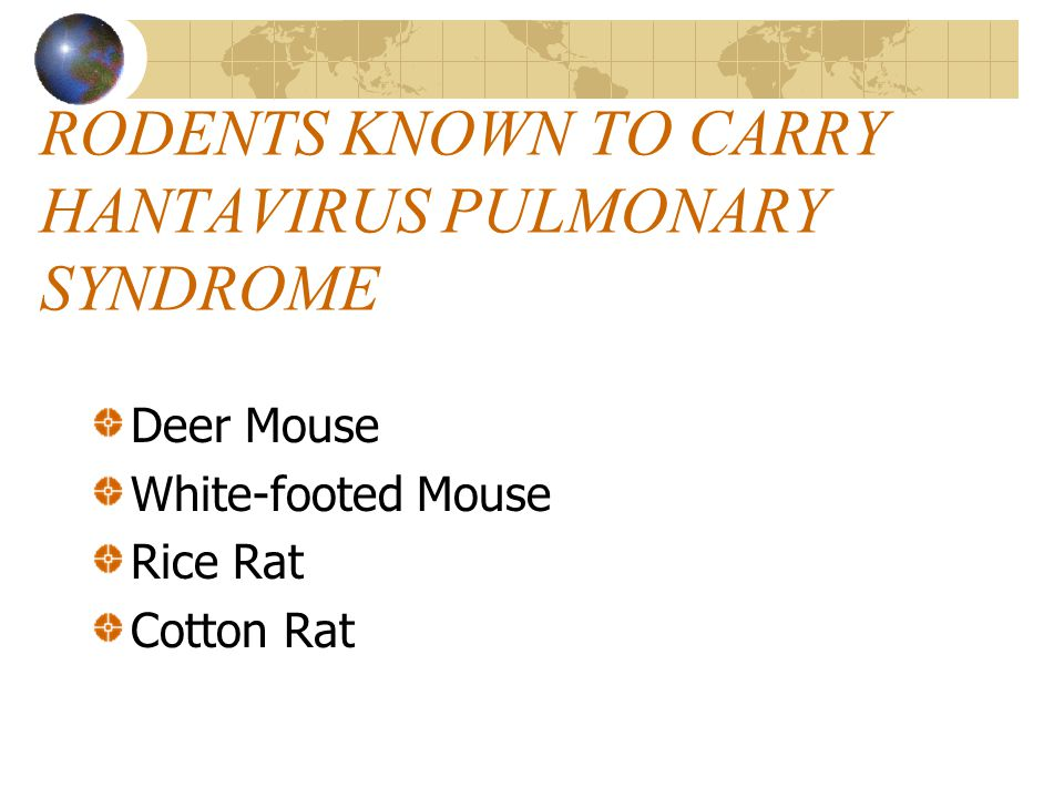 Deer Mouse Head & body about 2-3 inches long-tail adds another 2-3 inches Gray to reddish brown Underbelly always white Tail has sharply defined white sides Found almost everywhere in North America Prefers woodlands, but found in desert areas also