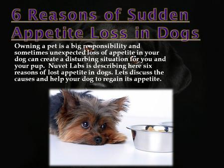 Owning a pet is a big responsibility and sometimes unexpected loss of appetite in your dog can create a disturbing situation for you and your pup. Nuvet.