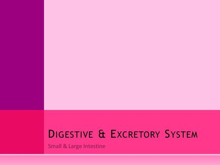 Small & Large Intestine D IGESTIVE & E XCRETORY S YSTEM.