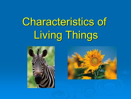 Characteristics of Living Things. What is an organism?  An organism is any living thing.