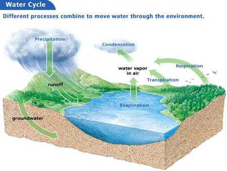 Before, you learned Matter cycles continuously through an ecosystem Living things are part of the water, carbon, and nitrogen cycles Now, you will.