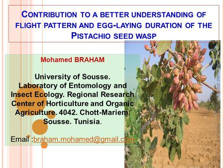 C ONTRIBUTION TO A BETTER UNDERSTANDING OF FLIGHT PATTERN AND EGG - LAYING DURATION OF THE P ISTACHIO SEED WASP Mohamed BRAHAM University of Sousse. Laboratory.