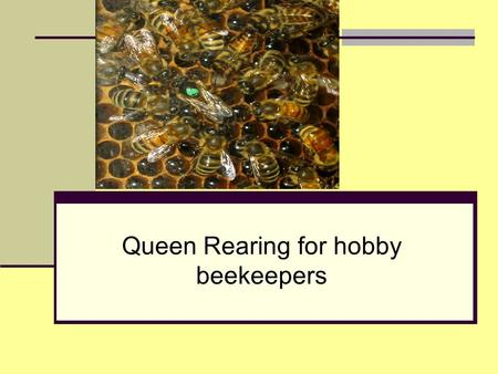 Queen Rearing for hobby beekeepers. Why rear your own queens? Cost Time Availability Mite and Disease Resistance Acclimatized Bees Quality.