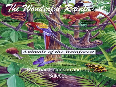 By Ethan Helgeson and Ian Salcedo The Wonderful Rainforest.