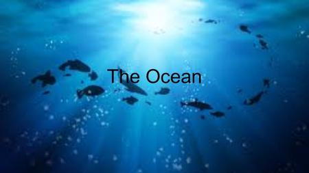 The Ocean. Ocean: Large body of water The ocean is salty water.