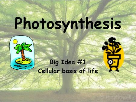 Photosynthesis Big Idea #1 Cellular basis of life.