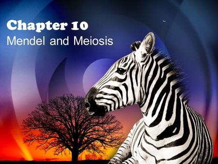 Chapter 10 Mendel and Meiosis. 10.1 Mendel's Laws of Heredity.