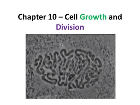 Chapter 10 – Cell Growth and Division. 10.1 Cell Growth, Division, and Reproduction As cells grow, a few problems arise. These problems limit a cell's.