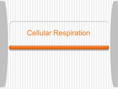Cellular Respiration What is Cellular Respiration? Step-by-step breakdown of high- energy glucose molecules to release energy Takes place day and night.