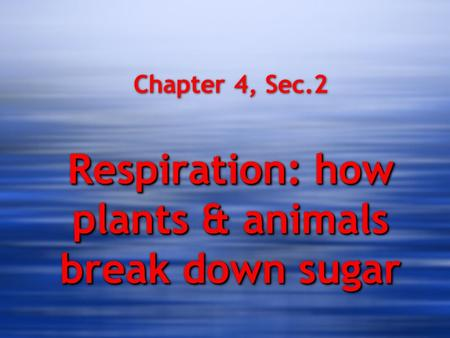 Respiration: how plants & animals break down sugar Chapter 4, Sec.2 Respiration: how plants & animals break down sugar.