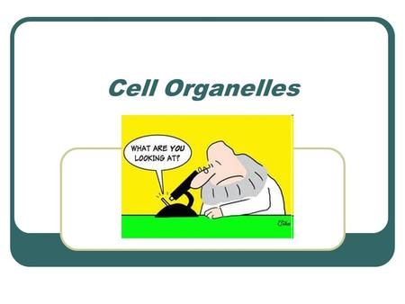 Cell Organelles. *Review* Types of Cells Prokaryotic Bacteria Archaea Eukaryotic Plants Animals Fungi.