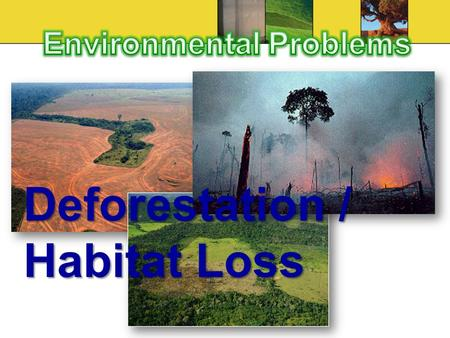 Deforestation / Habitat Loss. Cause Natural environments destroyed due to agriculture, excessive logging, forest fires, industrial and residential development.