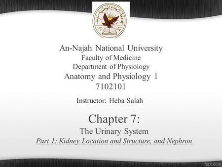 An-Najah National University Faculty of Medicine Department of Physiology Anatomy and Physiology 1 7102101 Instructor: Heba Salah Chapter 7: The Urinary.