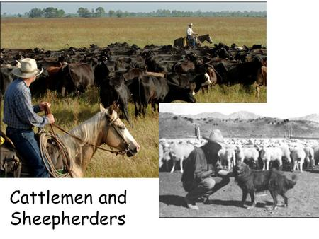 Cattlemen and Sheepherders. TheCattleTrailsTheCattleTrails.