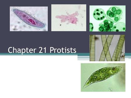 Chapter 21 Protists. What are protists? Eukaryotes that are not members of the plant, animal or fungi kingdoms They were the first eukaryotes (nucleus).