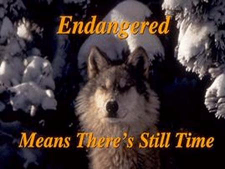 Endangered Means There's Still Time  Endangered species are like fire alarms. They tell us about problems in our home we call Earth.  If a species goes.