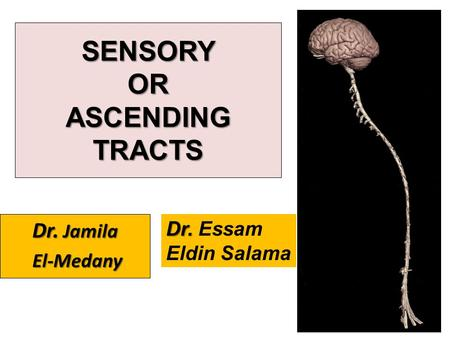 SENSORY OR ASCENDING TRACTS
