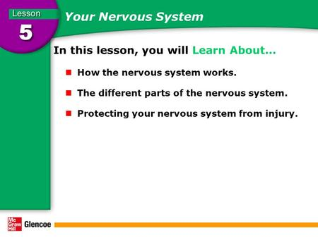 Your Nervous System In this lesson, you will Learn About… How the nervous system works. The different parts of the nervous system. Protecting your nervous.