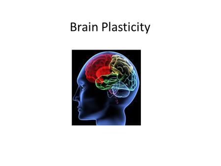 Brain Plasticity. To what extent can a damaged brain reorganize itself? Brain plasticity: brain's ability to change, esp. during childhood, by reorganizing.