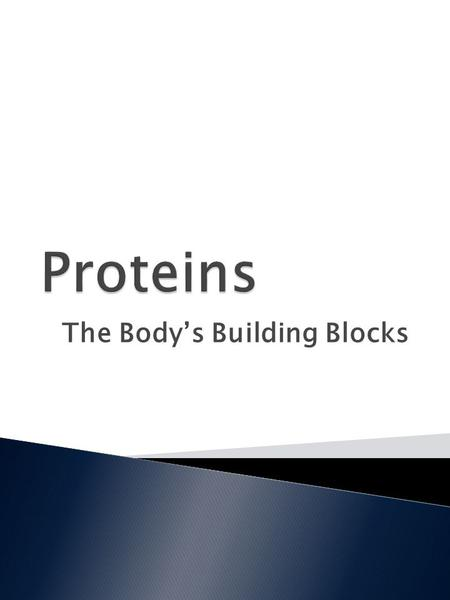 The Body's Building Blocks.  Explain the difference between essential and nonessential amino acids.  Discuss the functions of protein.  Identify animal.