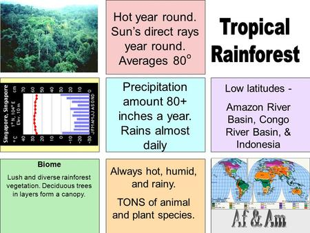 Hot year round. Sun's direct rays year round. Averages 80 o Precipitation amount 80+ inches a year. Rains almost daily Low latitudes - Amazon River Basin,