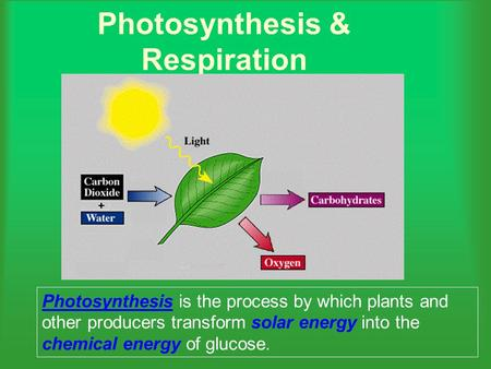 Photosynthesis & Respiration Photosynthesis is the process by which plants and other producers transform solar energy into the chemical energy of glucose.