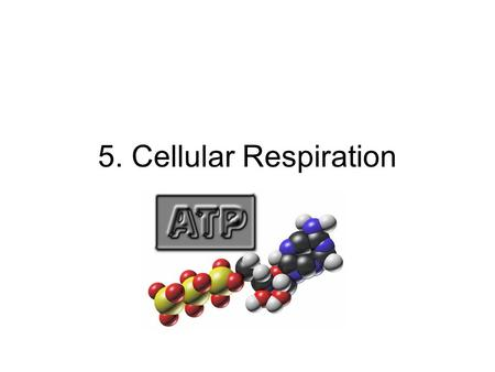 5. Cellular Respiration. A. Basic Process 1)In respiration, energy from food is converted to chemical bond energy to be used by cells 2)The only usable.