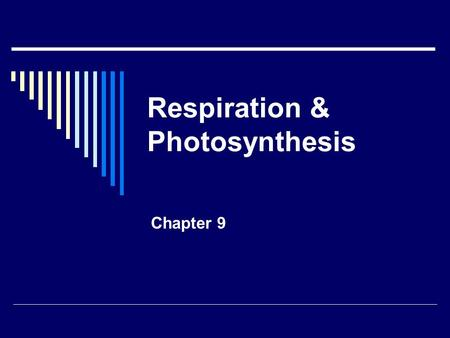 Respiration & Photosynthesis Chapter 9. Cell Energy p 44  Warm up: what is potential energy? Give 2 examples of it in your life.  All living things.