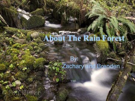 About The Rain Forest By: Zachary and Brenden. What is a rain forest? Rain forests are very amazing in some ways. They will always be green and colorful.