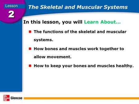 The Skeletal and Muscular Systems In this lesson, you will Learn About… The functions of the skeletal and muscular systems. How bones and muscles work.