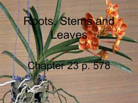Roots, Stems and Leaves Chapter 23 p. 578. Structure of Seed Plants The cells of seed plants are organized into different tissues and organs. The three.
