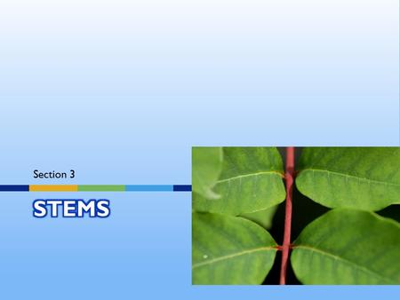 Section 3.  Stems produce leaves, branches, and flowers.  stems hold leaves up to the sun.  And stems transport substances throughout the plant.