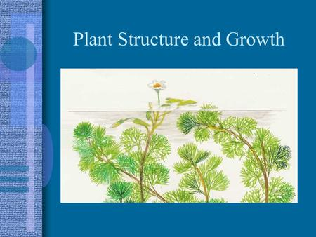 Plant Structure and Growth. Land Plants 3 major groups: –1. non-vascular plants No conducting tissue, often grouped together as bryophytes, usually small.